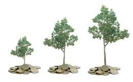 Träd som växer från högen av mynt royaltyfri bild