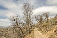 Träd som växer i Odd Directions på denna slinga Royaltyfri Bild
