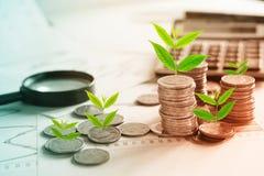 Träd som växer på bunt av mynt på finansiell diagramrapport med förstoringsglaset och räknemaskinen i bakgrund Royaltyfria Foton
