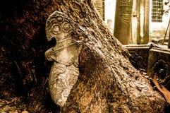 Träd som växer på en gammal gravvalv Arkivfoto