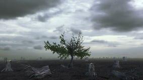 Träd som växer på ett kalhuggit land stock video