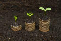 Träd som växer på mynt royaltyfri foto