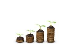 Träd som växer på mynt arkivfoto