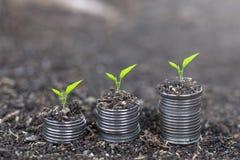 Träd som växer på mynt Växt som växer på pengarmyntbunt coins sparande för stapel för begreppshandpengar skyddande arkivbilder
