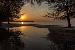 Träd som växer på stranden som reflekterar i en pöl på den guld- solnedgången Royaltyfri Fotografi