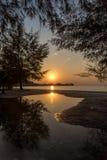 Träd som växer på stranden som reflekterar i en pöl på solnedgången Royaltyfria Bilder