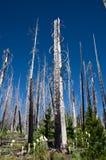 Träd som växer tillbaka Royaltyfri Foto