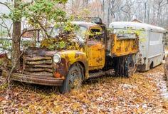 Träd som växer ut ur den övergav lastbilen Arkivfoton