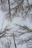 Träd som vertikalt fotograferas som de stänger sig Vinter royaltyfria bilder