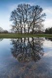 Träd in spegel-som reflexion på vatten royaltyfri bild