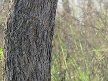 Träd stam, trä, natur, med suddighetsbakgrund Royaltyfri Fotografi