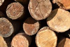 Träd stubbar Arkivfoto