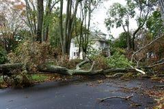 Träd tar ner elektriska trådar som suring den sandiga toppna stormen Arkivbild