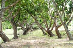 Träd texturerar i en parkera Arkivfoto