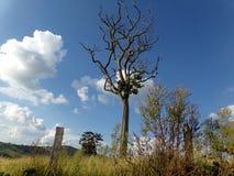 Träd till himlen Royaltyfri Fotografi