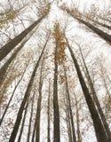 Träd till himmel Arkivfoto
