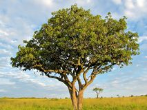 Träd till horisonten Royaltyfria Foton