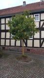 Träd timrat hus Arkivfoto