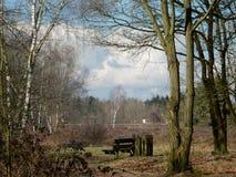 Träd, träbänk och hed Royaltyfri Fotografi