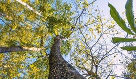 Träd tropisk bakgrund för grön lövverk Regnskogdjungeln planterar naturlig flora Arkivfoto