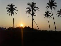 Träd två mellan solen Arkivfoto