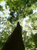 Träd under Arkivfoto