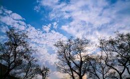 träd under blå och molnig himmel Royaltyfria Bilder