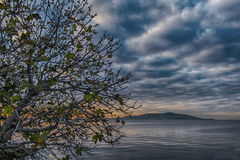 Träd under dramatisk himmel Arkivfoto