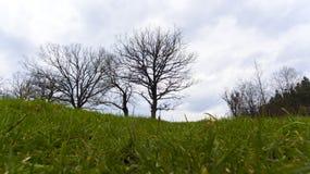 Träd under slott Arkivfoton