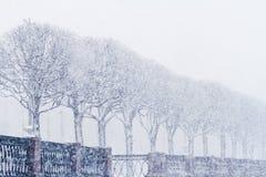 Träd under snö, vinter i St Petersburg Fotografering för Bildbyråer