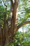 Träd under solljuset arkivfoton