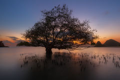 träd under solnedgång Arkivbilder