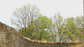 Träd under storm lager videofilmer