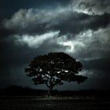 Träd under stormiga himlar, Oswestry, Shropshire, England Arkivfoton