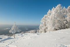 Träd under tung snö Arkivfoton