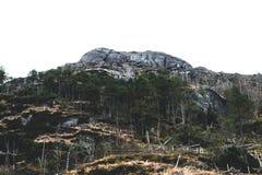 Träd upptill av berget Royaltyfri Foto