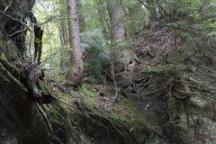 Träd upptill av klippaväggen royaltyfri bild