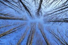 Träd utan bladet Arkivfoto