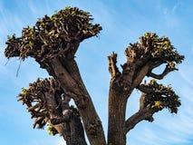 Träd utan filialer royaltyfri fotografi
