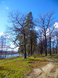 Träd utan sidor i höstskog Arkivbilder