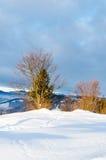 Träd utan sidor i snöframdelen Sikt av vinterberg Fotografering för Bildbyråer