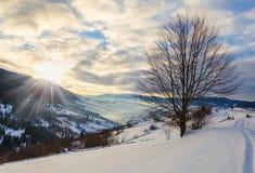 Träd utan sidor i snöframdelen Sikt av vinterberg Royaltyfria Foton