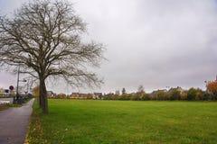 Träd utan sidor på grönt gräs i molnig dag på bakgrunden av lantliga hus france Royaltyfri Bild