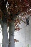 Träd-vänner Arkivfoto