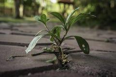 Träd växer och stenar Fotografering för Bildbyråer