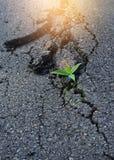 Träd växer på asfaltvägen Royaltyfri Fotografi