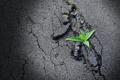 Träd växer på asfaltvägen Royaltyfri Bild