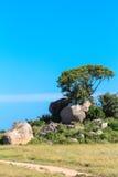 Träd växer vaggar på Savann av Serengetien Royaltyfria Foton