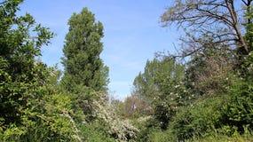 Träd växt, skog, blomma som är blom-, himmel, blom, blått, färg royaltyfria foton