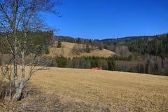 Träd vårlandskap, Hartmanice, bohemisk skog (Šumava), Tjeckien Royaltyfri Foto